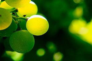 beneficios-de-la-uva-verde