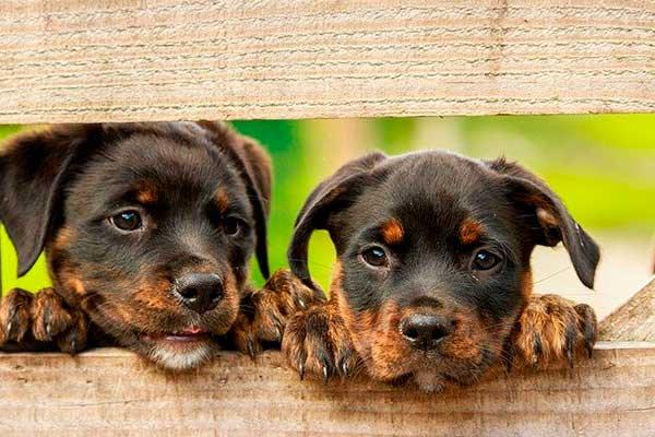 collar Seresto para perros